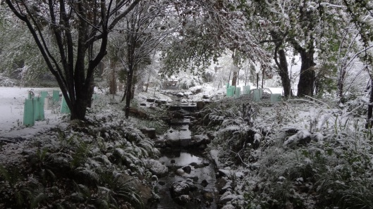 Snow on the creek