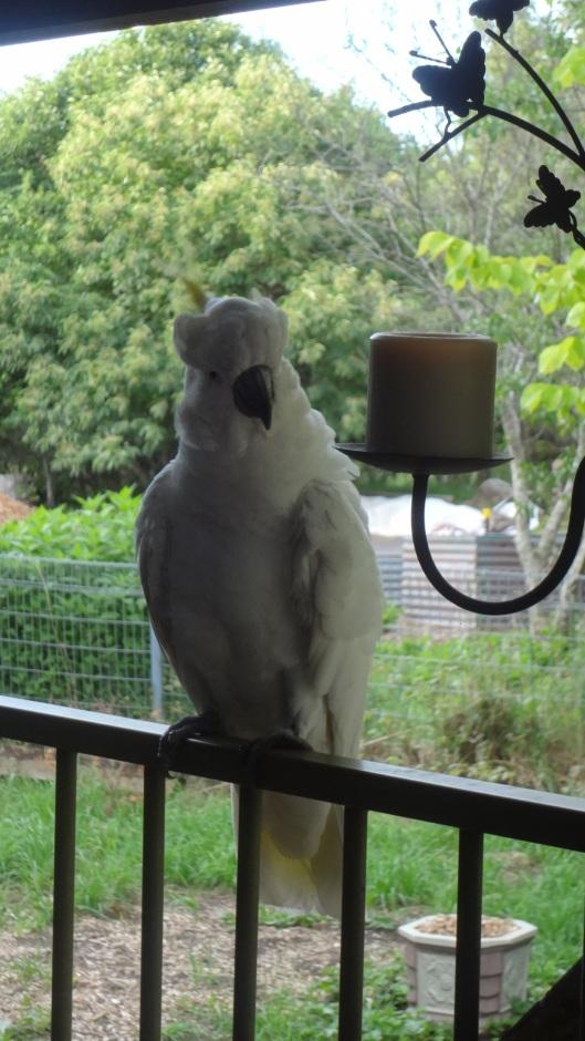 cheeky bird