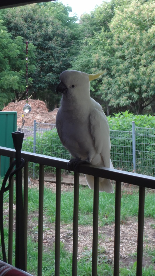 cheeky bird2