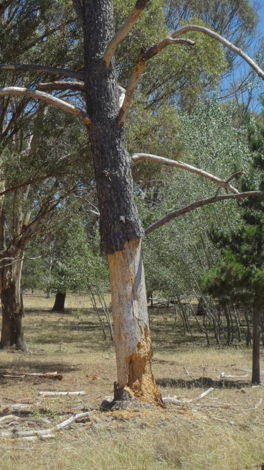 Same tree non HDR