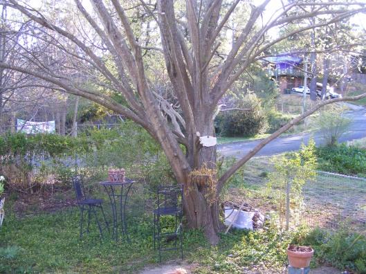 Tree Spring