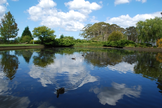 The duck pond at Fairmont Resort Leura