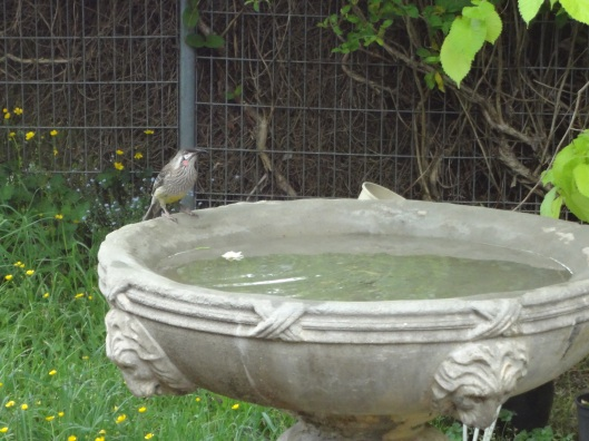 My bird bath