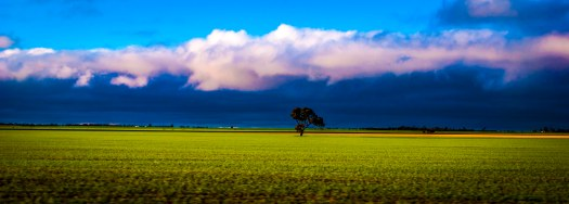 Saturated Field Victoria