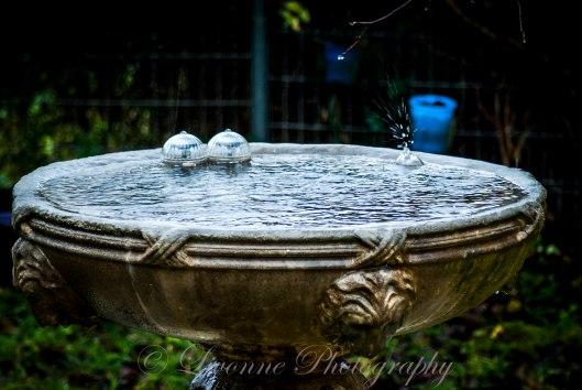 rain in the birdbath