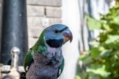 Pet Bird at the Hutong