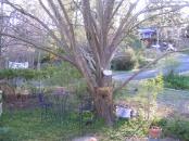 tree 1